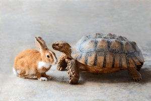 Tortoise and hare sitting next to one another