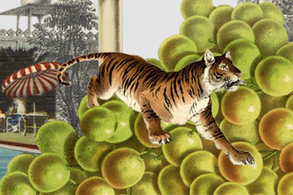 tiger by Maria Rivans